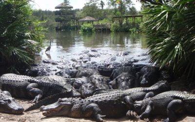 101… Nummer 16 – Gigantiska Alligatorer!