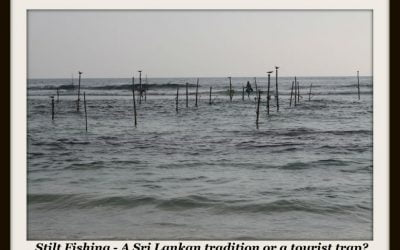Stilt Fishing – Sri Lanka.
