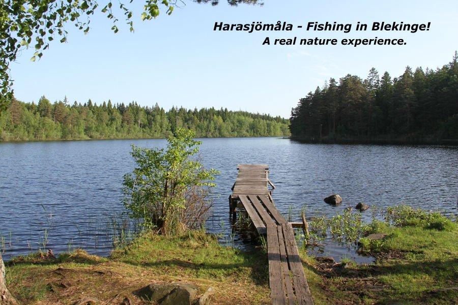 Fiske i Harasjömåla!