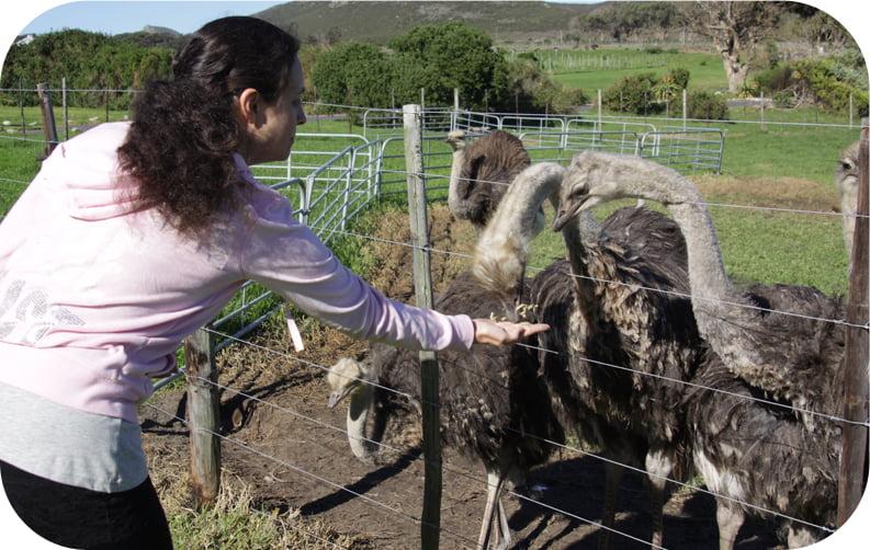 Ostrich-farm