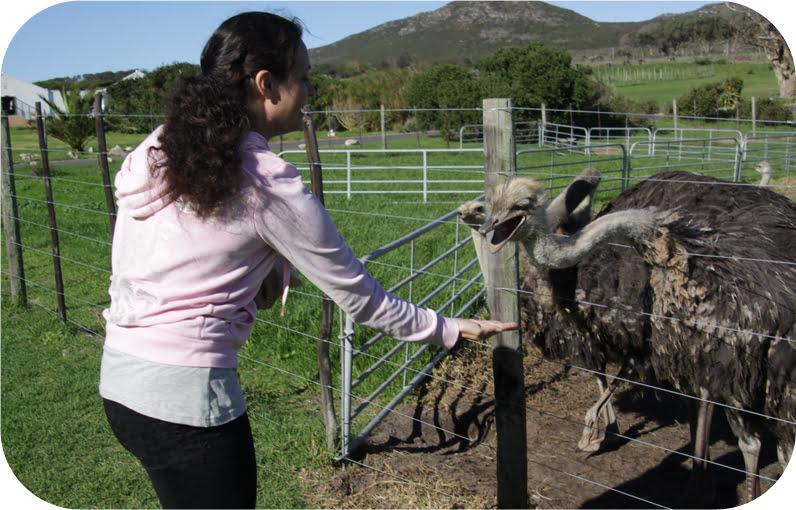 Ostrich-feeding