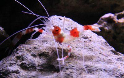 Interactive Aquarium Cancun – Mexico!