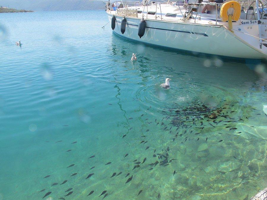 Vackra Korfos