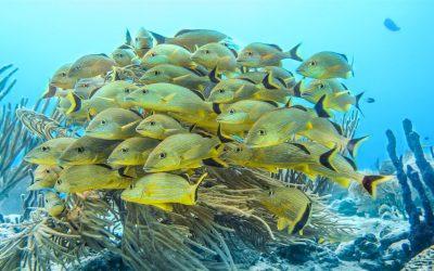 Scuba Diving – Playa Del Carmen VS Cozumel!