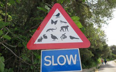 Gibraltar rock Wildlife signs!