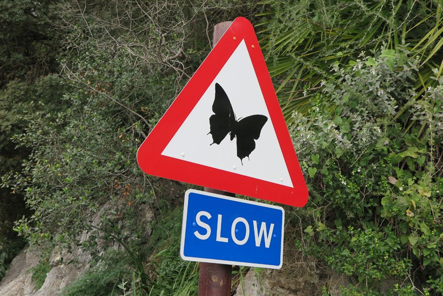 Butterfly SLOW sign at Gibraltar rock