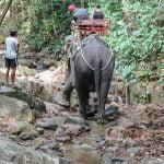 Elephant ride Thailand tourism
