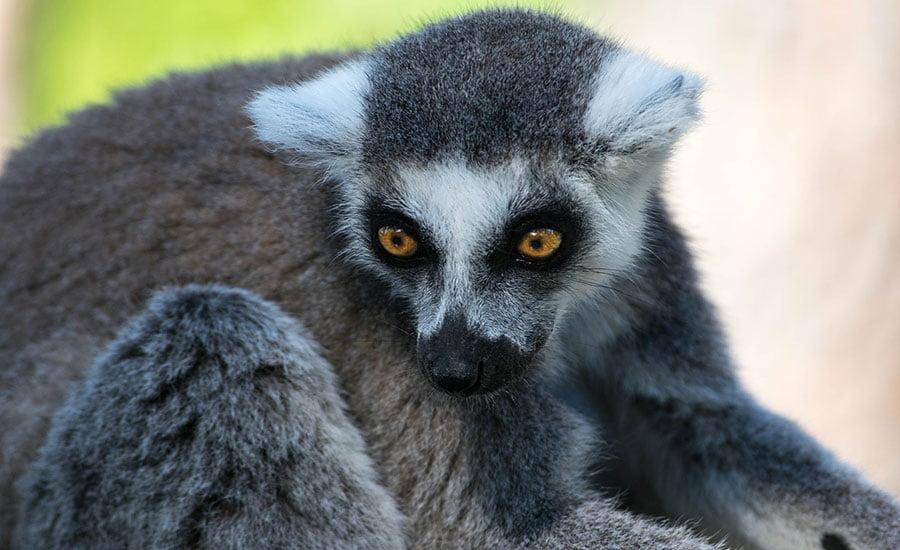 Travel trend Madagascar