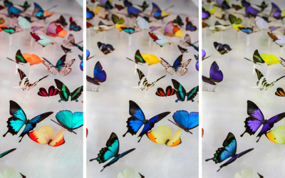The Butterfly People