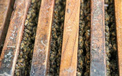 Big Bee Honey Farm in Phuket Thailand