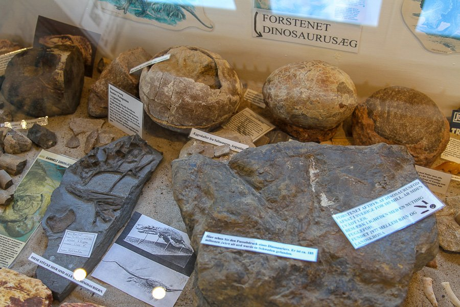 dinosaur eggs that are on display at the museum