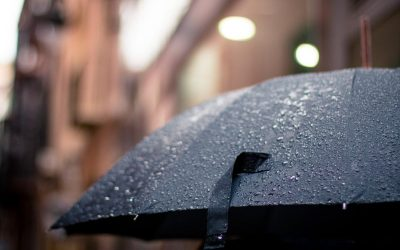 Dear Diary – The Swedish summer is not treating us nice