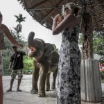 Elephant tourism. What is your responsibility