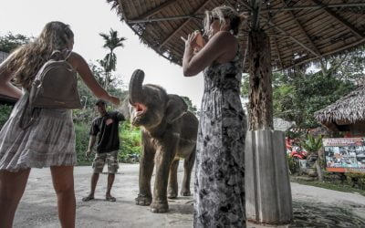 Elephant Tourism – What is your responsibility?