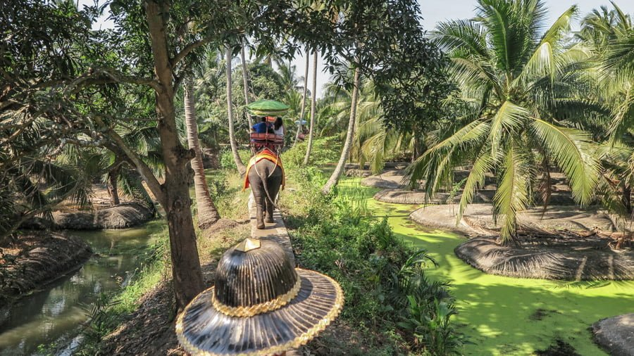 Elephant tourism. What is your responsibility?