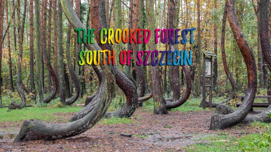 Must see – Crooked Forest near Gryfino, Poland