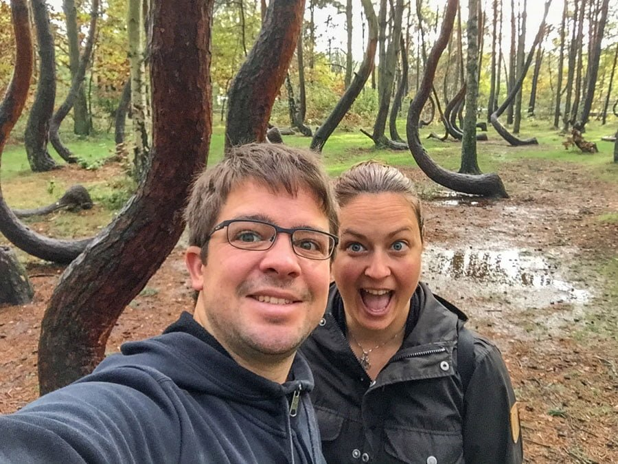 Crooked forest in Poland