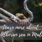 learn-more-about-the-alboran-sea-in-malaga-01.jpg