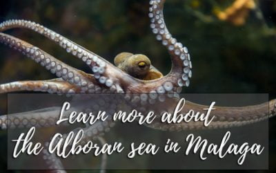 Learn more about the Alboran sea in Malaga