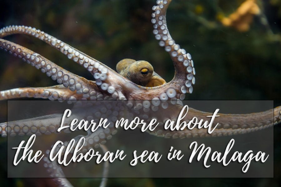 Learn more about the Alboran sea in Malaga
