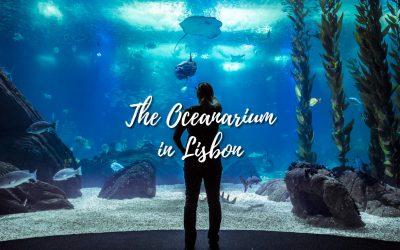 Oceanarium in Lisbon – Aquarium that you need to visit!