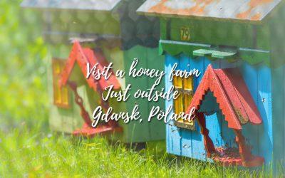 Honey farm – To bee – visiting a honey farm in Poland