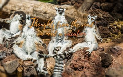 Thoughts from the road – Tenerife we have arrived and we need vacation