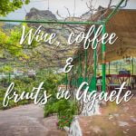 Wine and coffee and fruits in Agaete