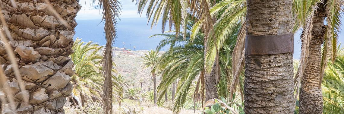Palm trees with a view La Gomera