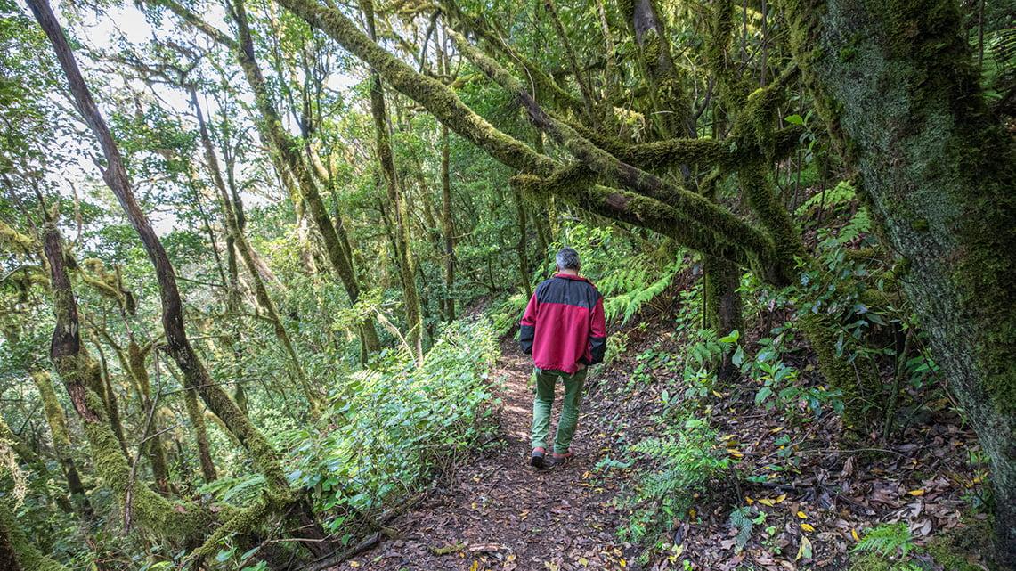 hiking guide to La Gomera