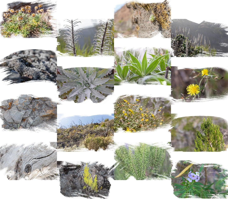 Flora at the Peak to Peak walk in Madeira