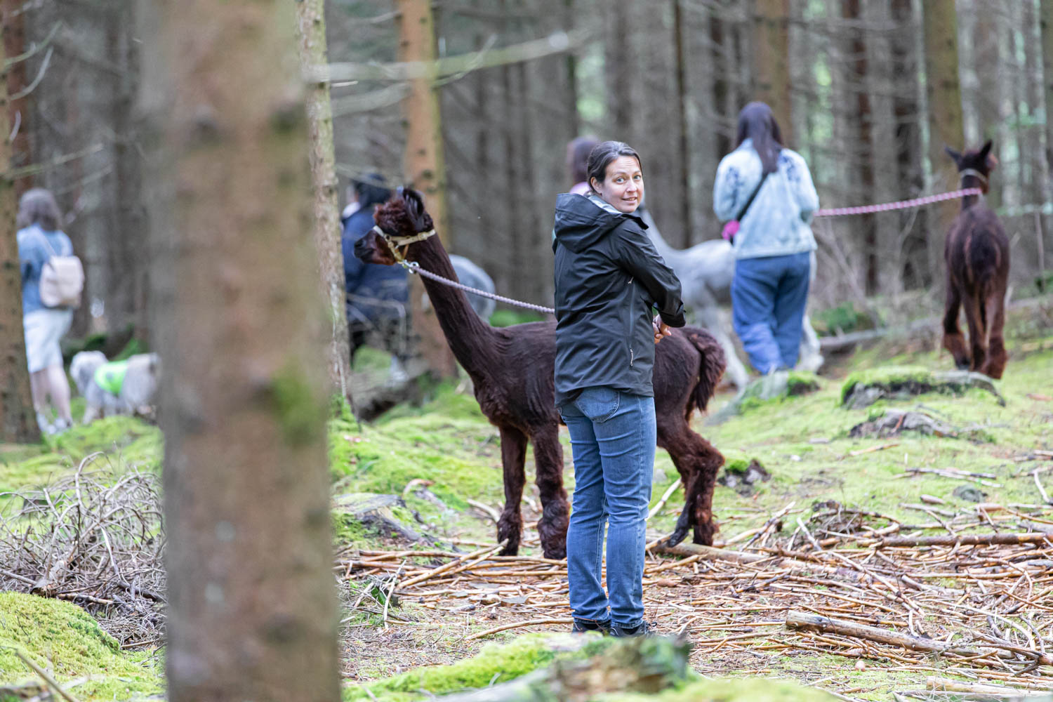 Our experience of the Alpaca Trekking