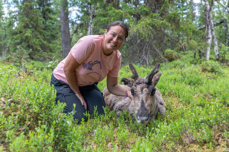Cuddling with reindeer in Dalarna