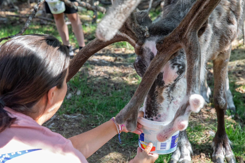 Feeding reindeer is awesome