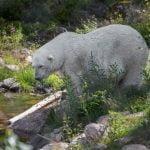 Orsa rovdjurspark - To do in Dalarna