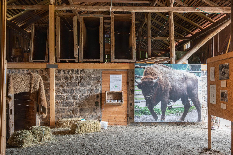 The barn at Avesta visent park